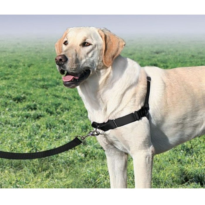 PetSafe Premier Easy Walk Harness
