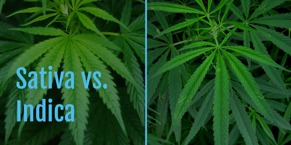 Sativa vs. Indica - what's the difference?