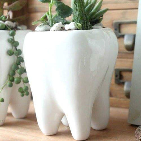 2 Pcs Tooth Shape Pastoral Style White Ceramic plant Pots - Dental Desire.com