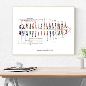 Watercolor Teeth Anatomy Poster - Dental Desire.com