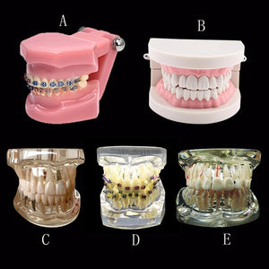 Various Dental Teeth Models Are Used For Teaching And Hospital Dentist Material - Dental Desire.com