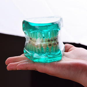 Orthodontics Metal & Ceramic Bracket Teeth Model - Dental Desire.com
