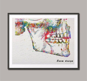 Mandible Maxilla Anatomy canvas painting Dental Wall art poster - Dental Desire.com