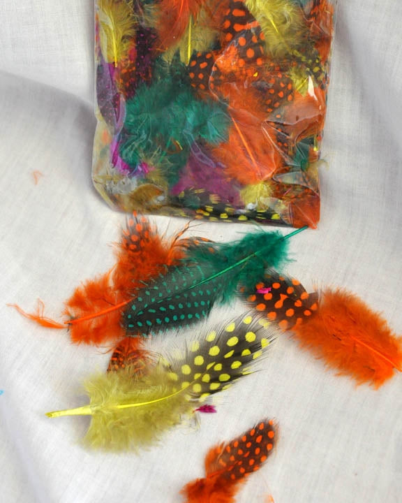 Assorted Guinea Feathers