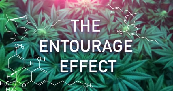 Entourage Effect: Full Spectrum with Cannabinoids and Terpenes