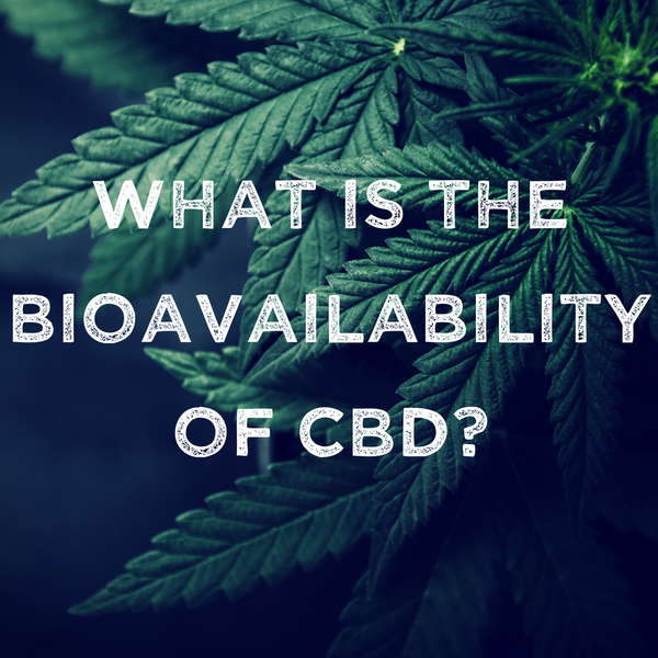 CBD Bioavailability: Quick & Efficient Absorption