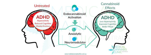 endocannabinoid system with cannabis helping ADHD