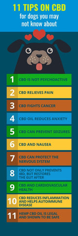 How CBD Benefits Your Dog