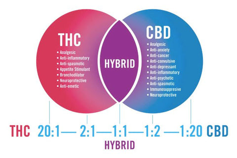 THC and CBD Ratio