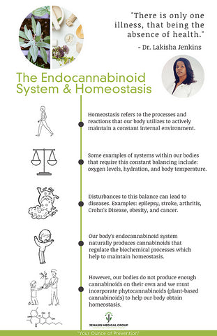 homeostasis with endocannabinoid system