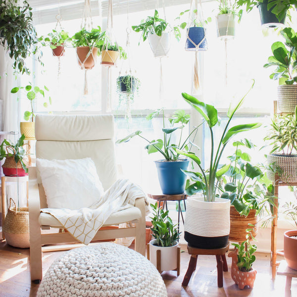 Great Houseplants for Beginners