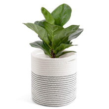 Load image into Gallery viewer, Cotton Rope Plant Basket Modern Woven Basket