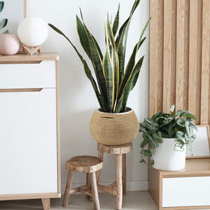 Cute Round Jute Rope Woven Plant Basket for plant lover