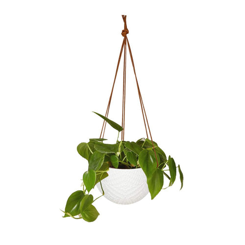 Hanging Flower Pots Modern Decor For Indoor Outdoor Plants