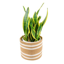 "Load image into Gallery viewer, Jute woven plant basket 10"" x 10"" Storage Organizer Basket"