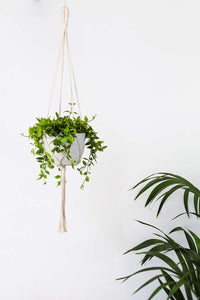 Macrame Wall Plant Hanger Hanging Planter Wall Art For Bedroom