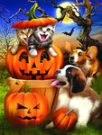 Boo Cat 500 Piece Jigsaw Puzzle by SunsOut