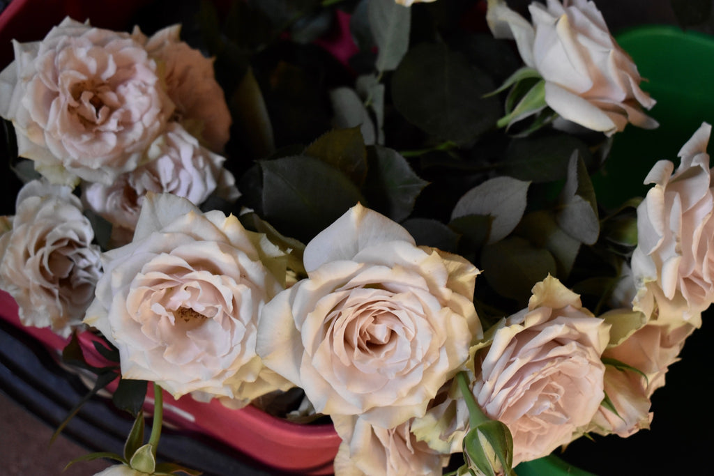 Roses - Lissom Beauty - New Zealand Skincare