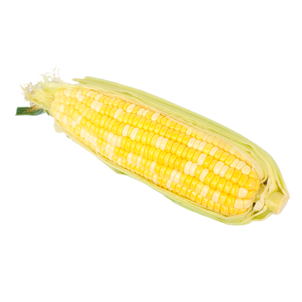 Sweet Bi-Color Corn