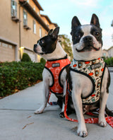 pumpkin spice latte dog harness - BRIXEN