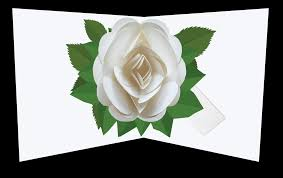 White Rose Pop Up Card