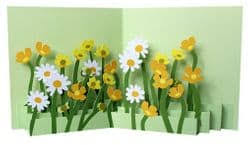 Buttercups & Daisies Pop Up Card