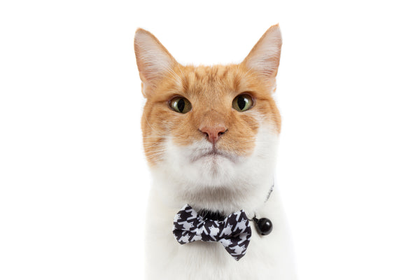 Cat Collar and Bow Tie Catstooth