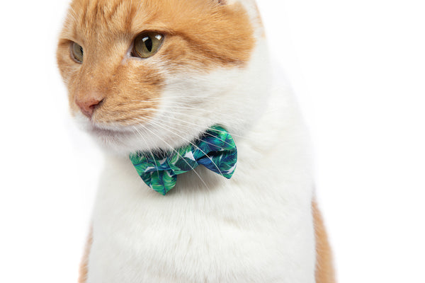 Cat Collar and Bow Tie Vacay Palms
