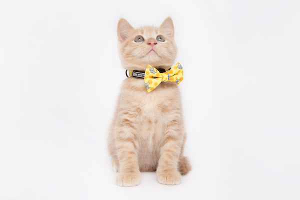 Cat Collar and Bow Tie Cheesin' Around Cat and Mice