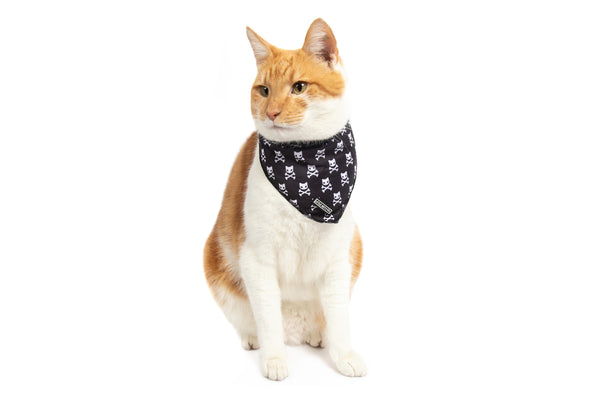 Cat Cooling Bandana Baddest of them All Black Cat Skulls