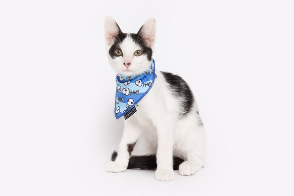 Cat Cooling Bandana Off The Hook Fish Skeleton Print