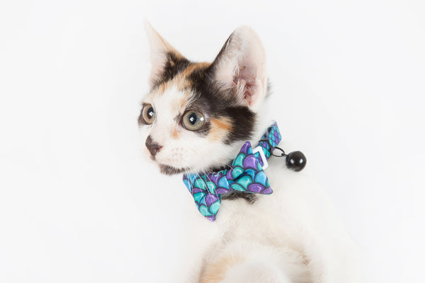 Little Kitty Co. Cat Collar & Bow Tie Scaled Back