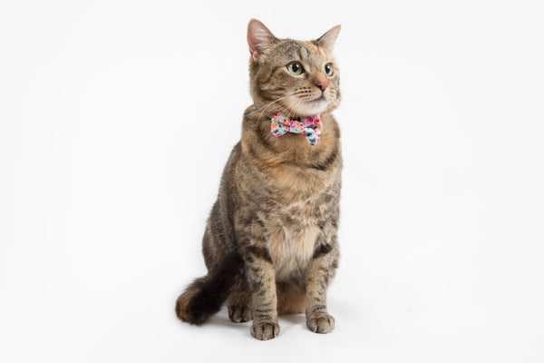 Little Kitty Co. Cat Collar & Bow Tie That Floral Feeling