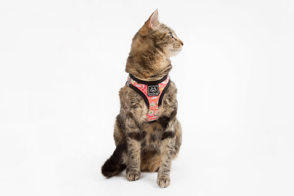 Little Kitty Co. Cat Step In Harness Sashimi Sushi