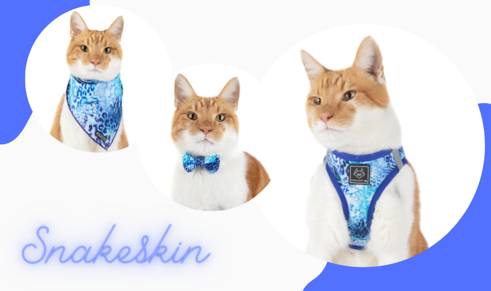 Little Kitty Co | Step In Cat Harness | Baddest & Prettiest of them All