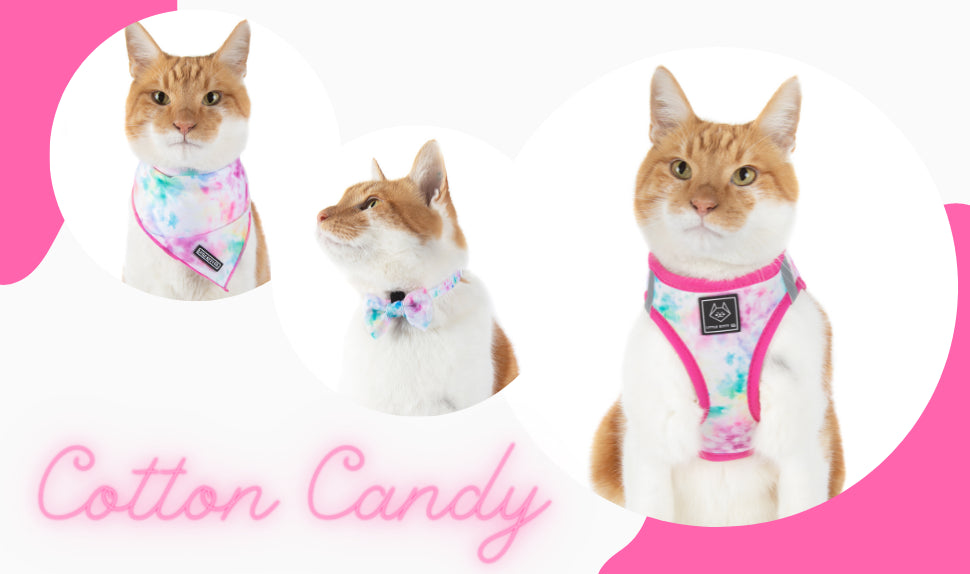 Little Kitty Co | Step In Cat Harness | Bee-Hiving