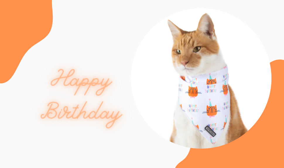 Little Kitty Co | Step In Cat Harness | Catstooth