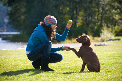 Top Reasons to Teaching Dog Tricks