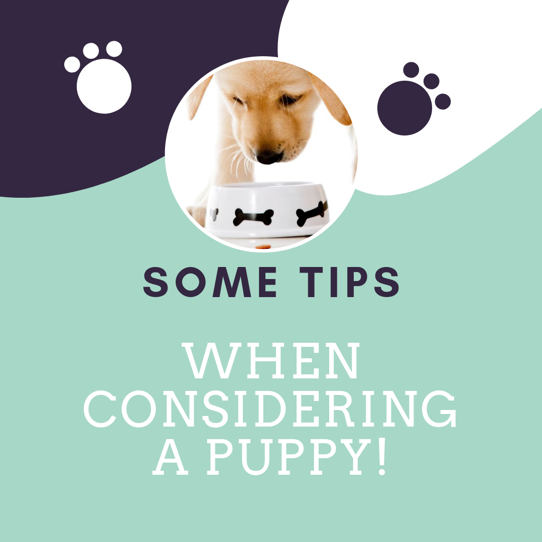 Tips when considering a puppy