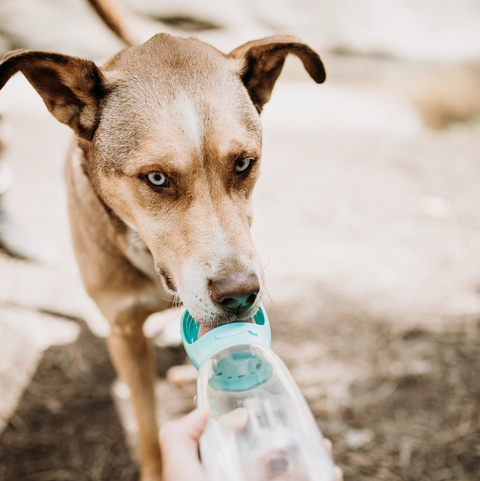 Doggy Water Bottle 350/550ML - Dog Shop Deals