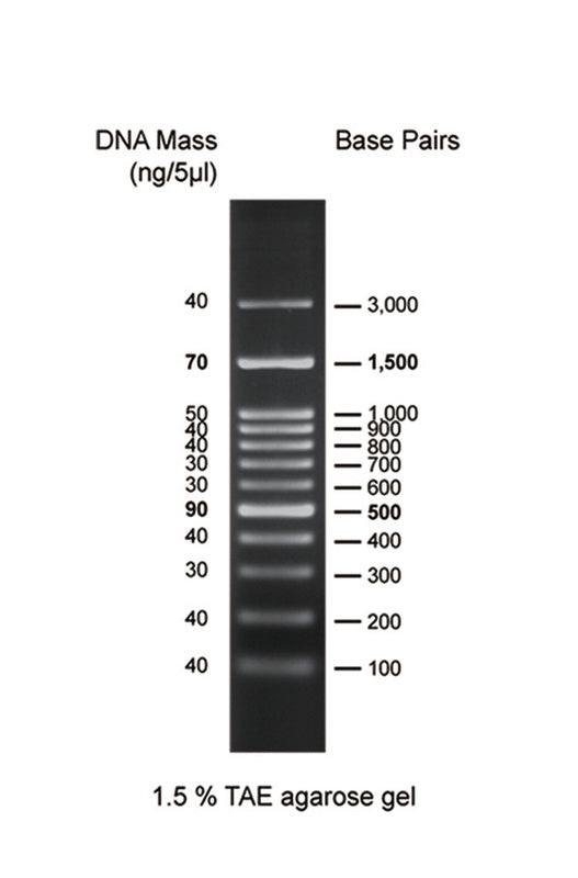GD 100bp DNA Ladder H3 RTU - Clover Biosciences, LLC