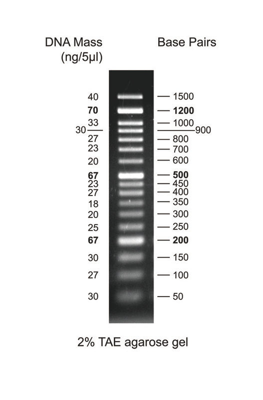 GD 50bp DNA Ladder RTU - Clover Biosciences, LLC