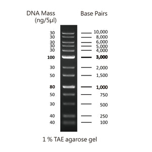 GD 1Kb Plus DNA Ladder RTU