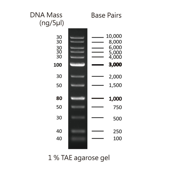GD 1Kb Plus DNA Ladder RTU - Clover Biosciences, LLC