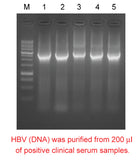 Mbead Virus Genomic Nucleic Acid Kit - Clover Biosciences, LLC