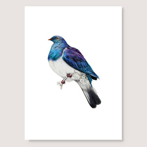 SALE print Wood Pigeon