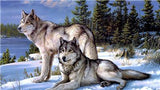 Wolves and Snow