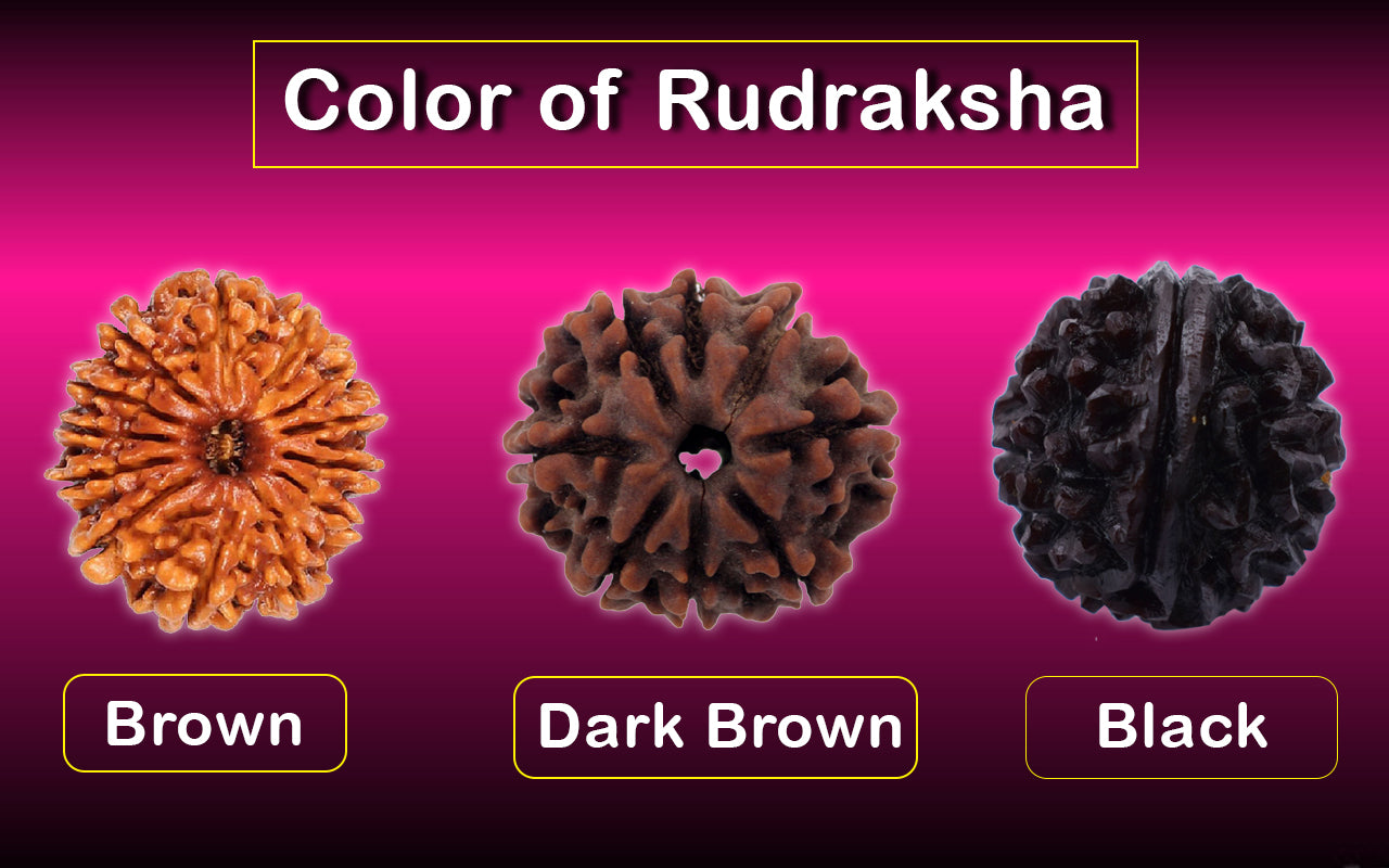 Color of Rudraksha