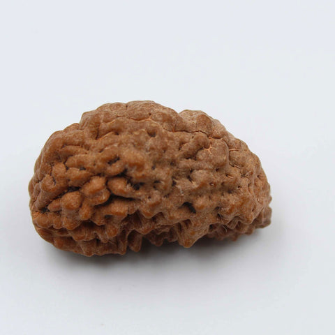 Natural One Face Rudraksha 3.182gms / 26.43mm Kaju shape Rudraksha Certified by IGL @ Ajretail - 1 Mukhi Rudraksha