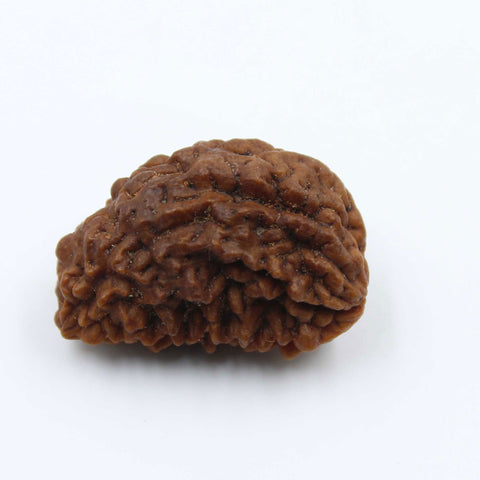 Natural One Face Rudraksha 2.730gms / 24.20mm Kaju shape Rudraksha Certified by IGL @ Ajretail - 1 Mukhi Rudraksha
